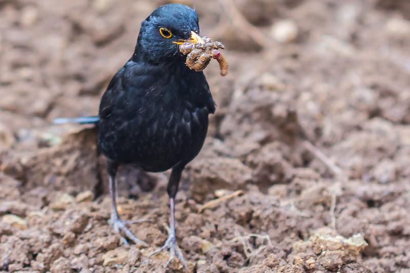 Buon appetito!! di Ma Photo
