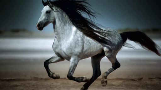 Horses HD Live Wallpaper