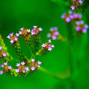 Natural Flowe Arraingement by James Newberry - Flowers Flowers in the Wild ( wild, purple, nature, green, wallpaper, outdoor, flower )