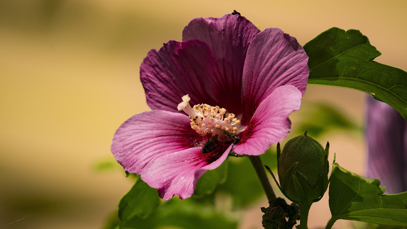 Flower and Bee in a Garden di giorgia_cocco