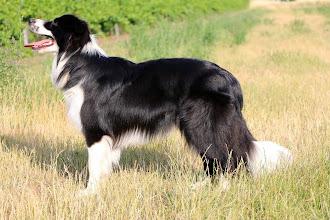 Photo: Duke, 10 Monate