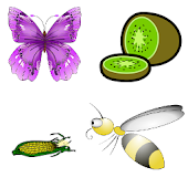 Frencn and English Animals Bugs Fruits Vegetables