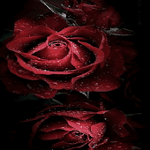 Magical Roses Live Wallpaper Android APK Download Free By Daksh Apps