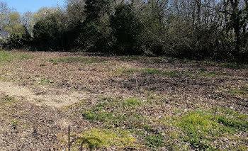 terrain à Sarzeau (56)