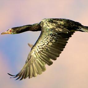 by Fanie Weldhagen - Animals Birds