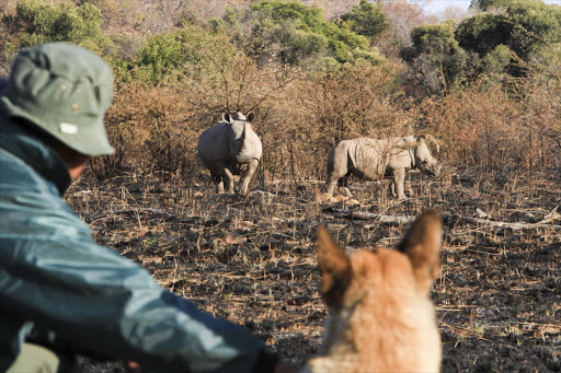 Anti-poaching dog Russell, with his handler, protecting rhinos at the Pilanesburg Nature Reserve. File photo.