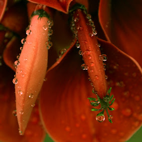 The Heart by Sanjeev Leihao - Nature Up Close Flowers - 2011-2013 ( love & care )