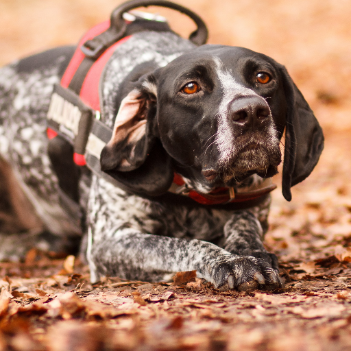 German Shorthaired Pointer HQ HD Wallpapers