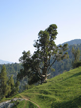 Photo: Kulp, Shate ravine