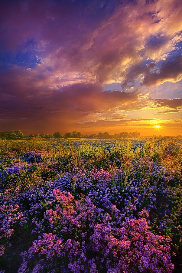 Life Is Measured In Moments by Phil Koch - Flowers Flowers in the Wild ( vertical, arts, fine art, travel, yellow, love, sky, nature, weather, light, trending, colors, twilight, art, mood, journey, horizon, rural, portrait, country, dawn, environment, season, serene, popular, outdoors, lines, natural, hope, inspirational, canon, wisconsin, ray, joy, landscape, sun, photography, life, emotions, dramatic, horizons, inspired, clouds, office, purple, heaven, camera, beautiful, scenic, living, morning, lilacs, field, unity, blue, sunset, peace, meadow, summer, beam, sunrise, earth )
