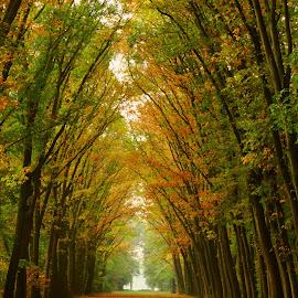 Autumn tunnel. by Gert de Vos - Landscapes Forests ( forest, fall colors, autumn, landscape, lane )
