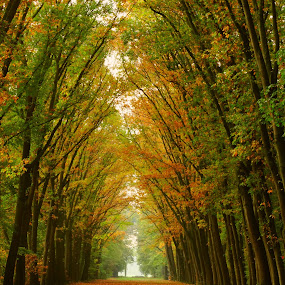 Autumn tunnel. by Gert de Vos - Landscapes Forests ( forest, fall colors, autumn, landscape, lane )