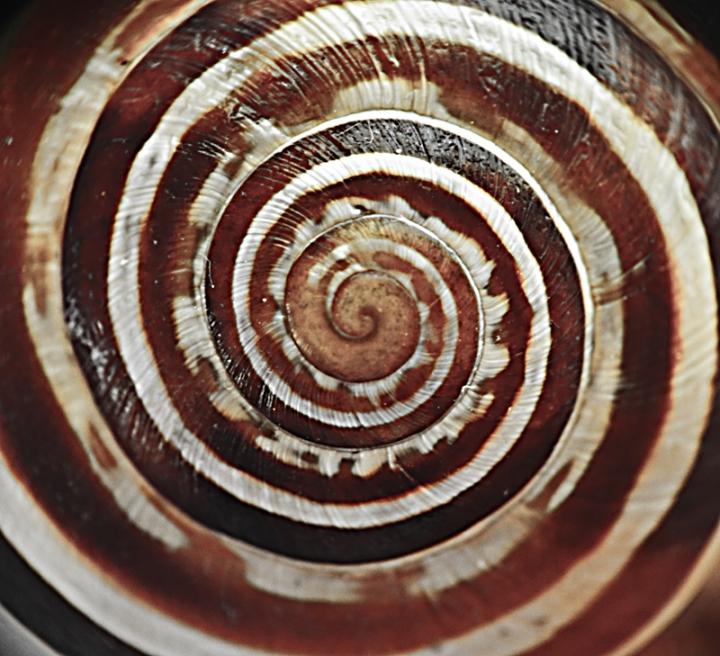 Spirale logaritmica di PietroP