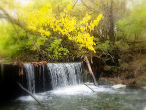 Photo: Yellow leaves hanging over a waterfall at Eastwood Park in Dayton, Ohio.