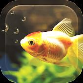 Fish Aquarium Live Wallpaper