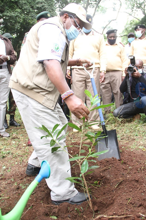 Environment CS Keriako Tobiko plants a tree to mark the International Day to Combat Desertification and Drought at Nairobi City Park on June 17,2020.