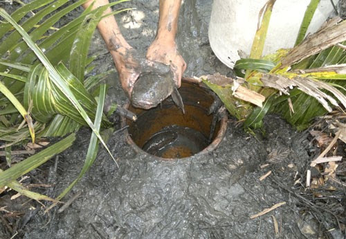 Làm hầm bắt cá vào mùa khô ở rừng U Minh Hạ 5