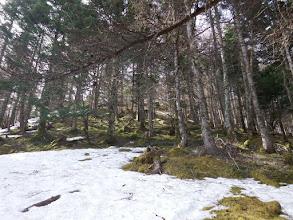 雪を避けて急斜面を進む