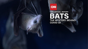 Bats: The Mystery Behind Covid-19 thumbnail