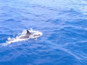 Photo: Не поверите - еще дельфин!/ I do not believe it... another one!