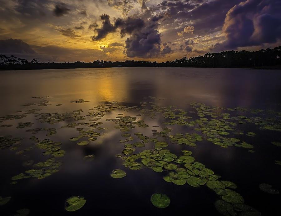 Western Lake by Jim Hamel - Landscapes Sunsets & Sunrises ( florida, lake, seaside, lily pads, western lake )