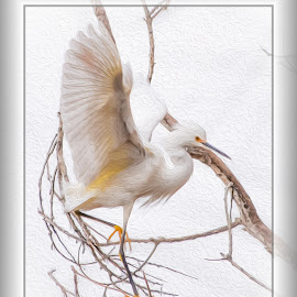 Egret by Dawn Hoehn Hagler - Digital Art Animals ( egret, tucson, arizona, bird, photoshop, oil paint, sweetwater wetlands, digital art )