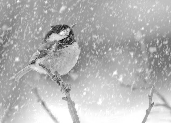 Cade la neve di Marlak