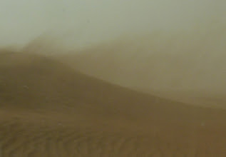 Photo: July and August bring sandstorms to M'hamid and the walking sand dunes cover our young trees and waterboxx's.