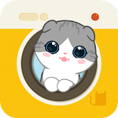 Hellopet mini - Scottish Fold and photo fun