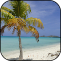 Palm tree wallpapers APK