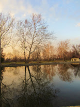 Photo: Tree reflected in a lake in a soft sunset at Eastwood Park in Dayton, Ohio.