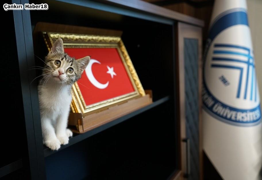 Çankırı Karatekin Üniversite Rektörü,Rektör Hasan Ayrancı,Çankırı Üniversitesi,