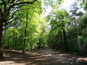 Photo: Strambtuge, Bois deu Carnoi