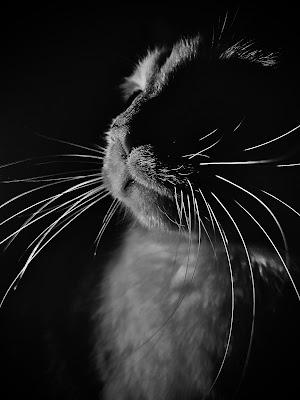 cat's moustache di martina_salvi