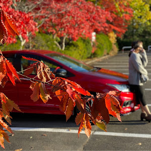 グレイス GM5 HV EX 4WDのカスタム事例画像 satoshiさんの2020年10月31日23:07の投稿
