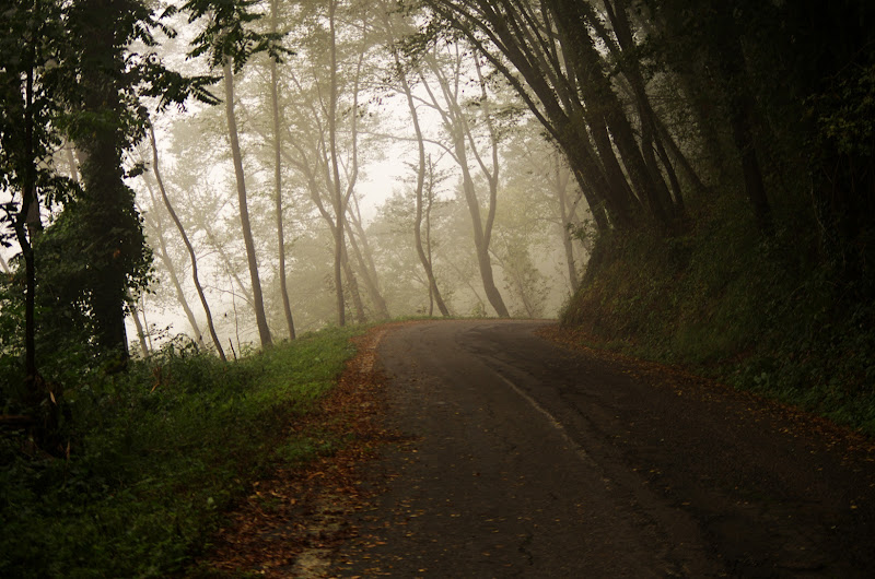 Nel bosco di Federica.G
