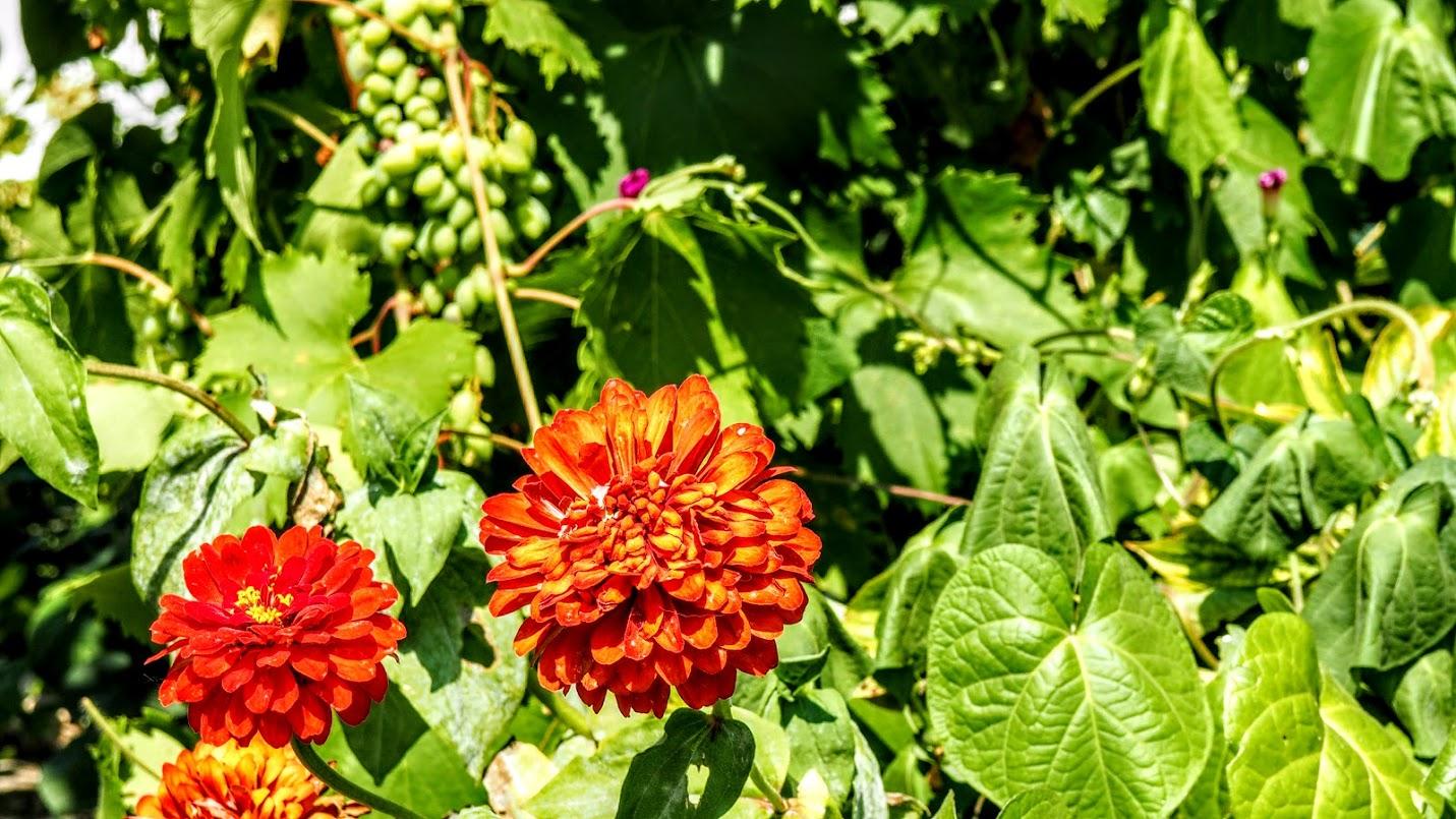 цветочки в Межводном