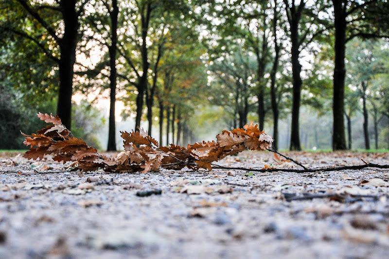 Foglie d'autunno di emanuela_terzi