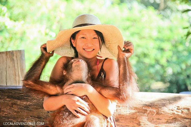 Bali Safari and Marine Park (Things to Do in Bali Indonesia).