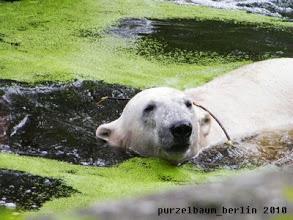 Photo: Schwimmrunde mit Ast auf dem Ruecken ;-)
