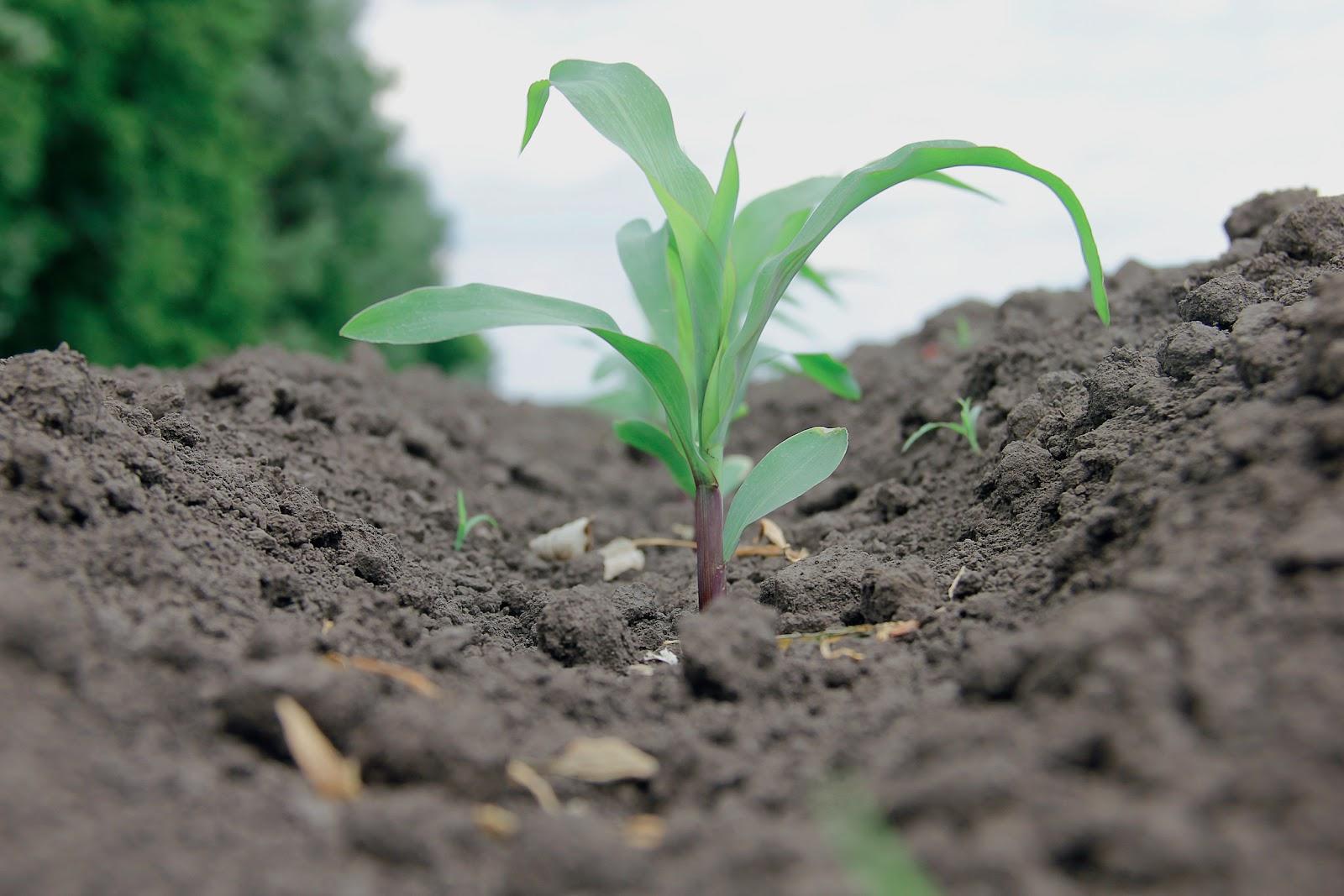 Зачем нужны средства защиты растений?