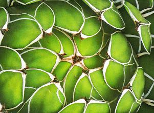 Photo: Nature's patterns Macro shot of a succulent reveals great patterns. My contribution to #MacroMonday
