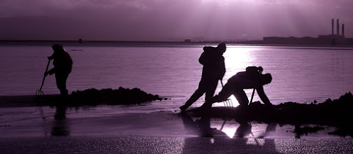 Photo: A Special one just for The #PurpleCircle and +Sinead Sam McKeown +lynn langmade +Craig Szymanski and +Alexis Coram I just had to get me some purple tonight.  Clamming in Dublin Bay.