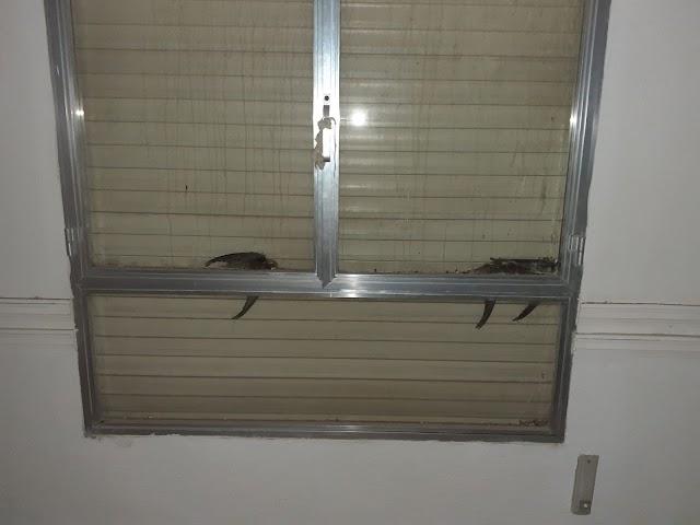 Pájaros muertos en la planta superior.