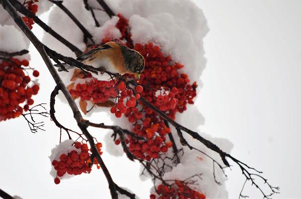 cibo per affrontare il freddo di Elisabetta Castellano