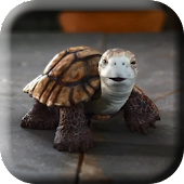 Talking Turtle Live Wallpaper