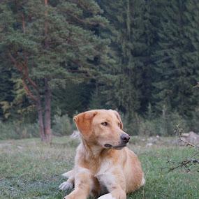 by Tadeia Fedor - Animals - Dogs Portraits (  )
