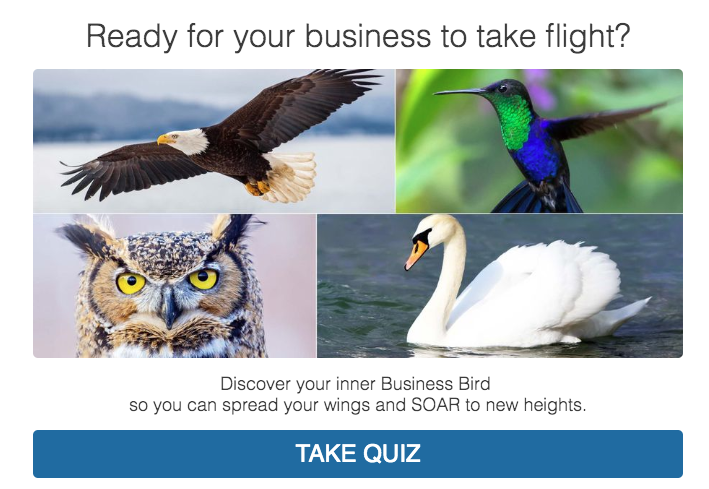 Ready for your business to take flight? quiz cover