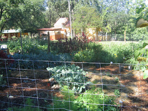 Photo: Yoga Farm, CA - permaculture gardening