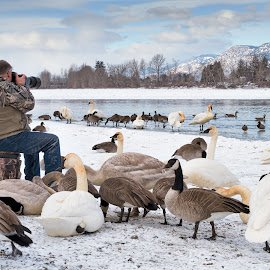 Waterfront Waterfowl by Garry Dosa - People Street & Candids ( winter, birds, scenery, water, waterfowl, blue, outdoors, white, person, snow, photographer, animals, river, man )